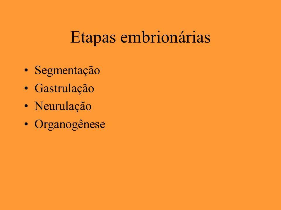Etapas embrionárias Segmentação Gastrulação Neurulação Organogênese
