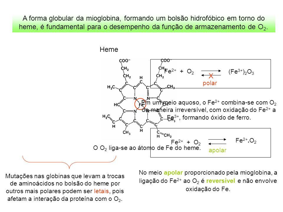 O O2 liga-se ao átomo de Fe do heme.