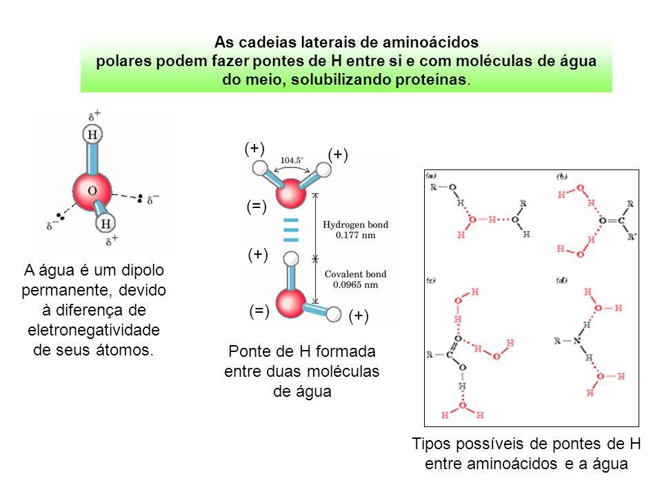 As cadeias laterais de aminoácidos