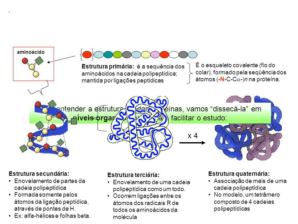 . Estrutura primária: é a sequência dos aminoácidos na cadeia polipeptídica; mantida por ligações peptídicas.