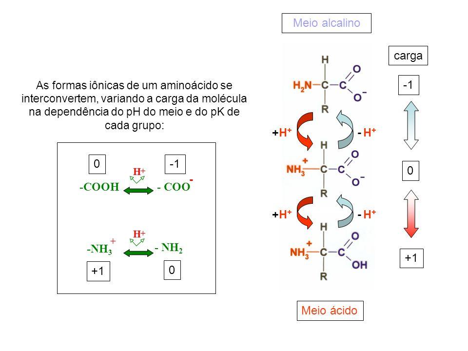Meio alcalino carga -1 +H+ - H+ -1 - -COOH - COO -NH3 - NH2 +1 +1