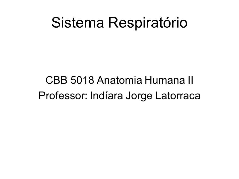 Professor: Indíara Jorge Latorraca