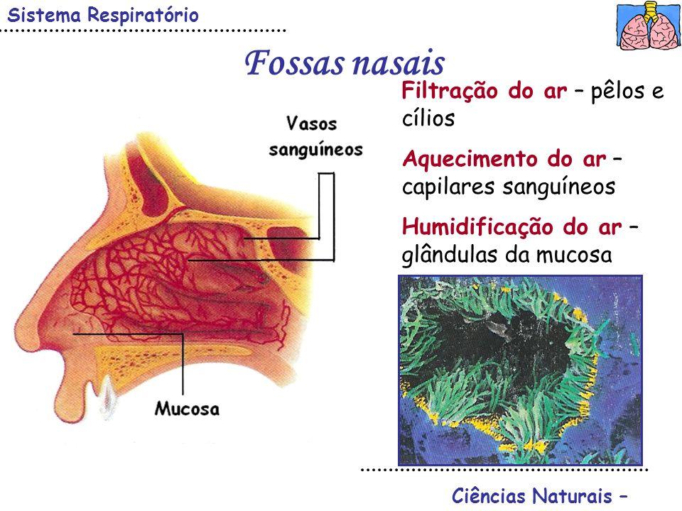 Fossas nasais Filtração do ar – pêlos e cílios
