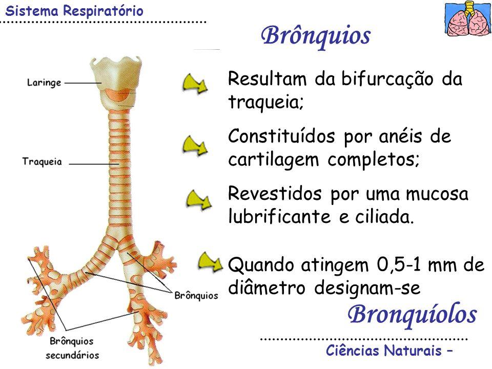 Brônquios Bronquíolos