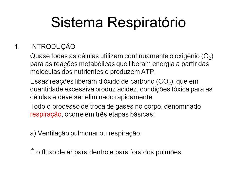 Sistema Respiratório INTRODUÇÃO