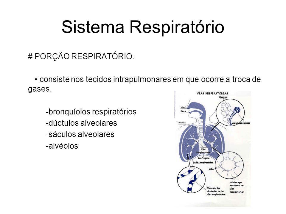 Sistema Respiratório # PORÇÃO RESPIRATÓRIO:
