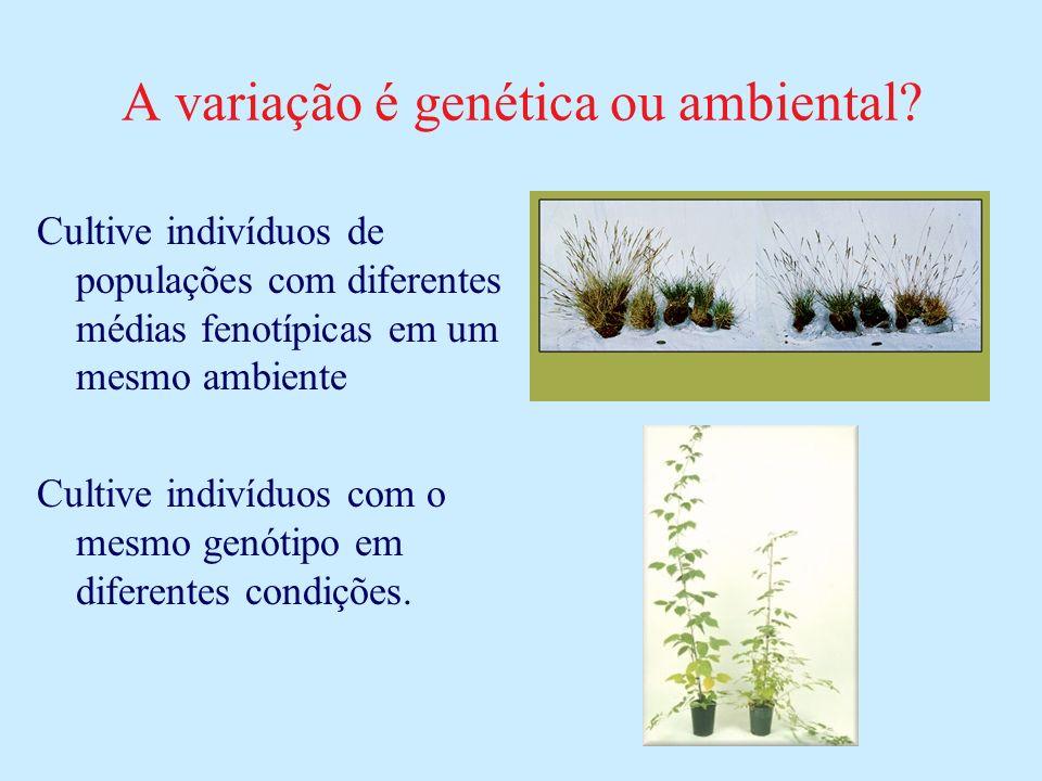 A variação é genética ou ambiental