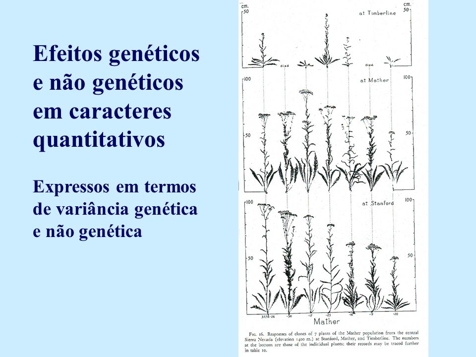 Efeitos genéticos e não genéticos em caracteres quantitativos