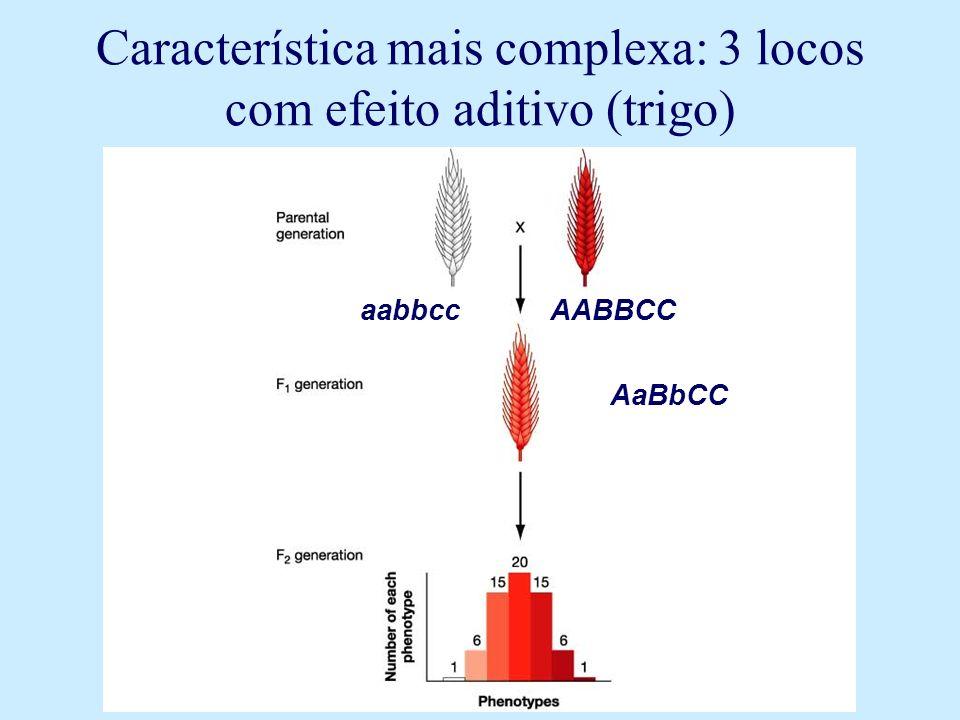 Característica mais complexa: 3 locos com efeito aditivo (trigo)