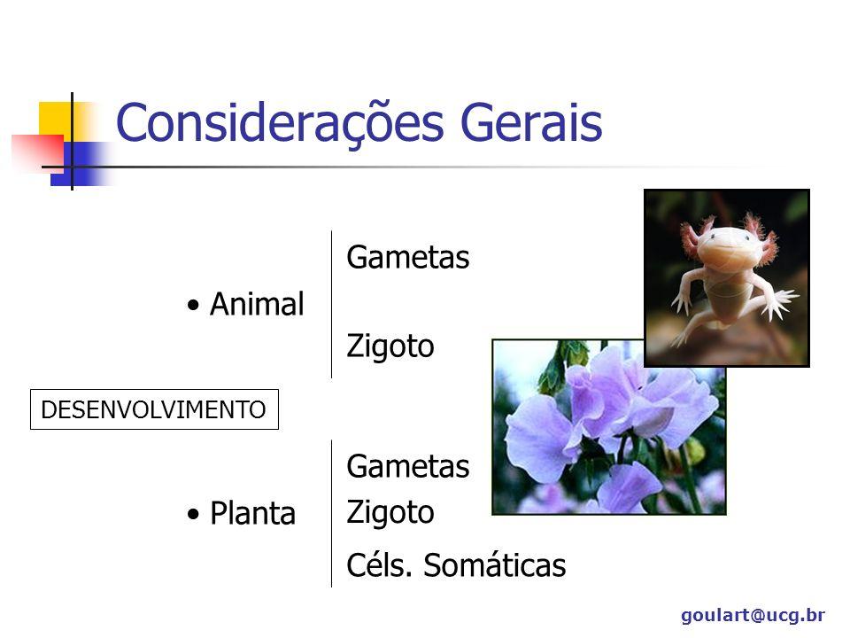 Considerações Gerais Gametas Animal Zigoto Gametas Planta Zigoto