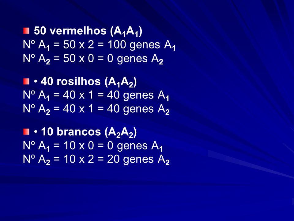 50 vermelhos (A1A1) Nº A1 = 50 x 2 = 100 genes A1. Nº A2 = 50 x 0 = 0 genes A2. • 40 rosilhos (A1A2)