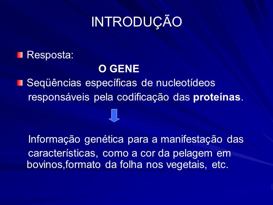 INTRODUÇÃO Resposta: O GENE Seqüências específicas de nucleotídeos