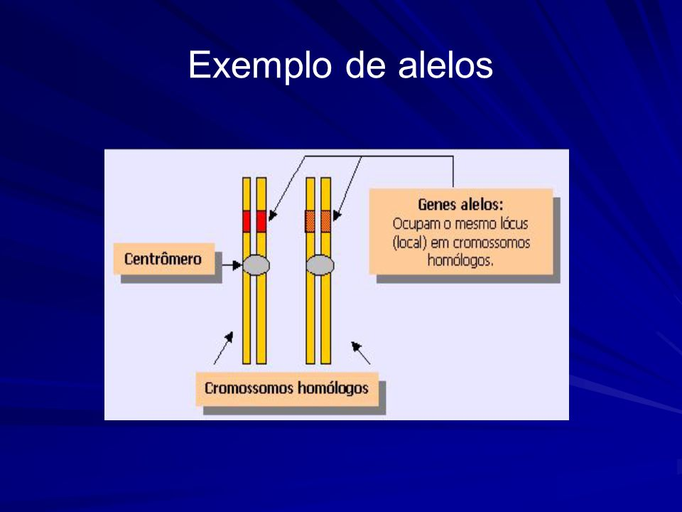 Exemplo de alelos
