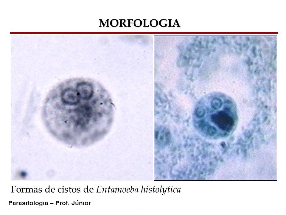 MORFOLOGIA Formas de cistos de Entamoeba histolytica