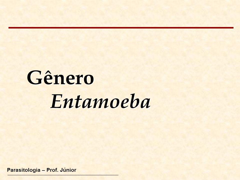 Gênero Entamoeba