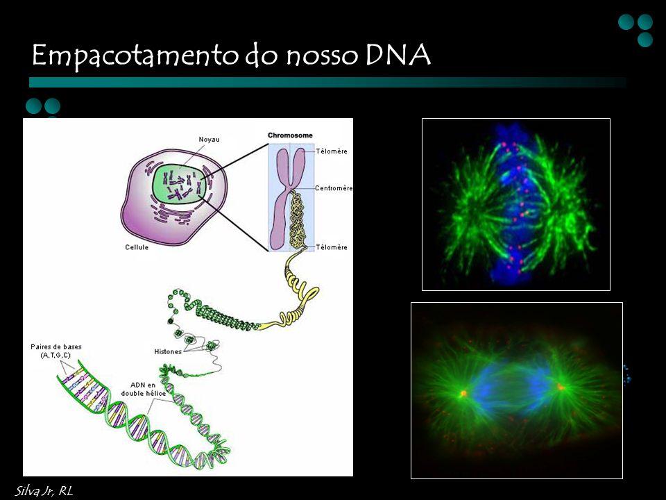 Empacotamento do nosso DNA