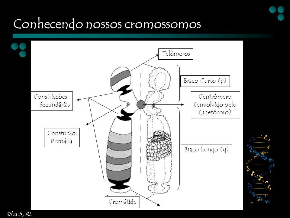 Conhecendo nossos cromossomos