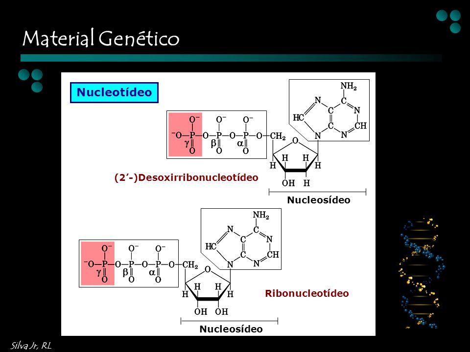 Material Genético Nucleotídeo    (2'-)Desoxirribonucleotídeo