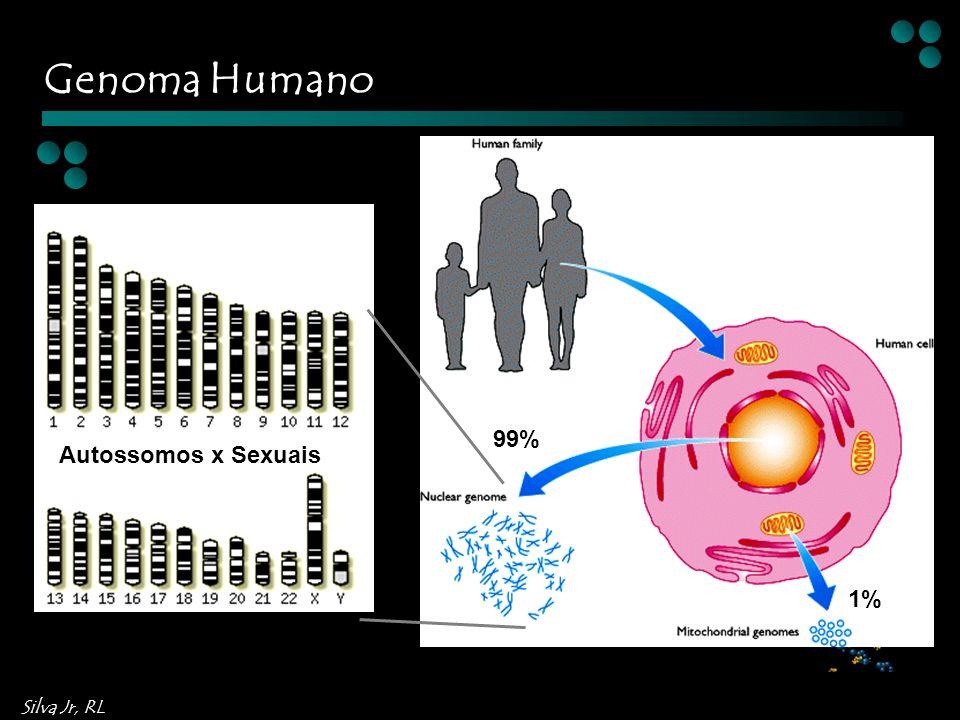 Genoma Humano Autossomos x Sexuais 99% 1%