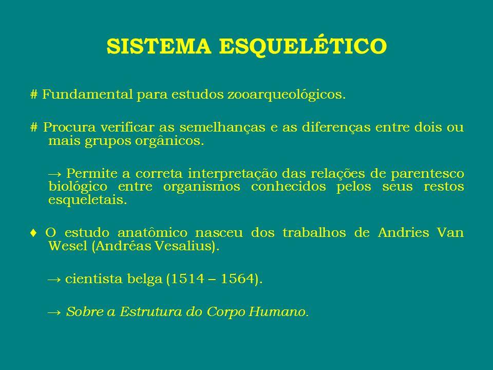 SISTEMA ESQUELÉTICO # Fundamental para estudos zooarqueológicos.