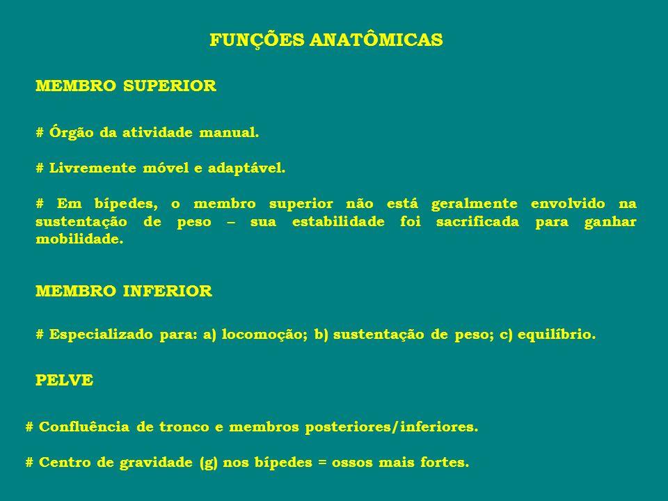 FUNÇÕES ANATÔMICAS MEMBRO SUPERIOR MEMBRO INFERIOR PELVE