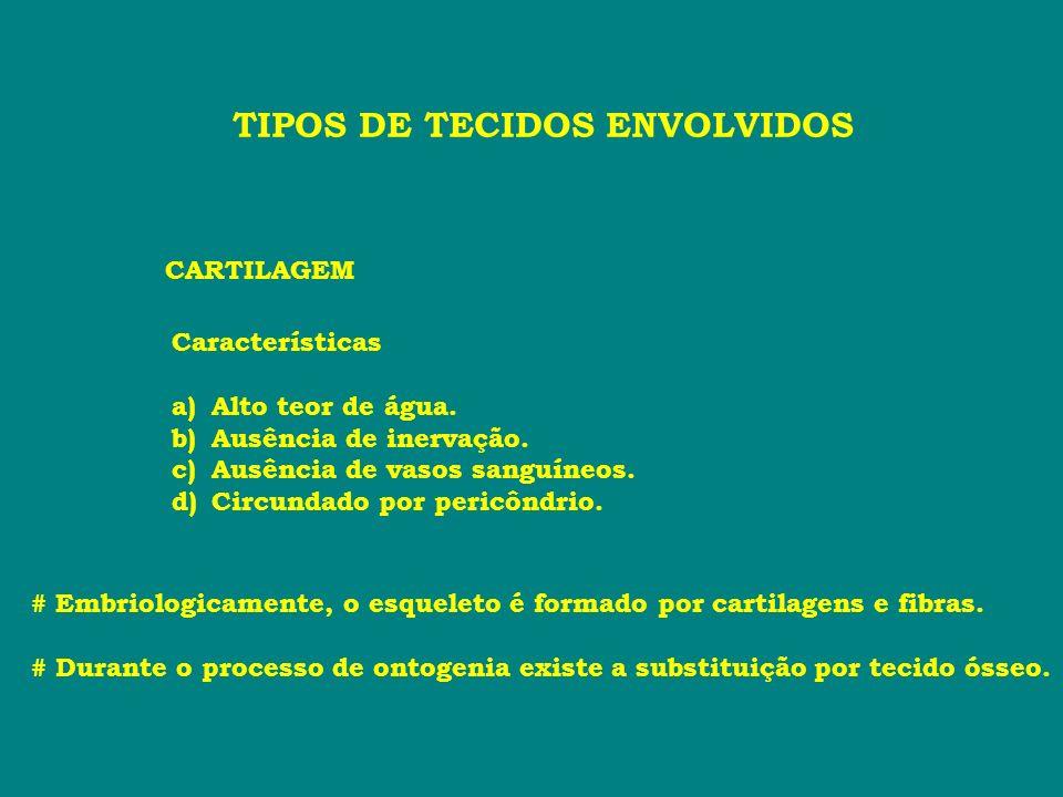 TIPOS DE TECIDOS ENVOLVIDOS