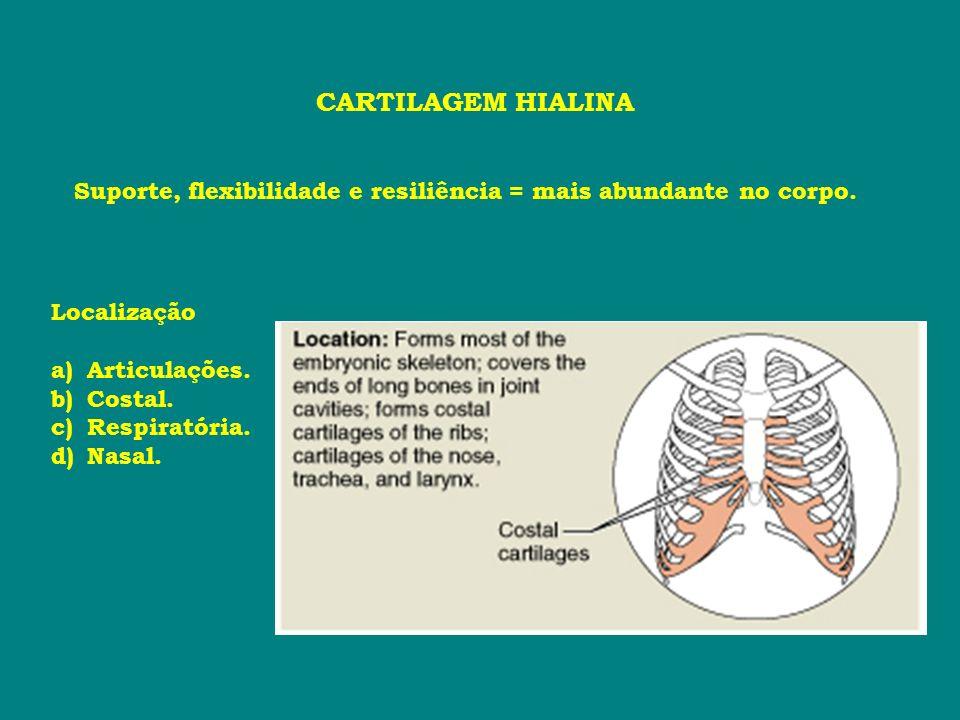 CARTILAGEM HIALINASuporte, flexibilidade e resiliência = mais abundante no corpo. Localização. Articulações.