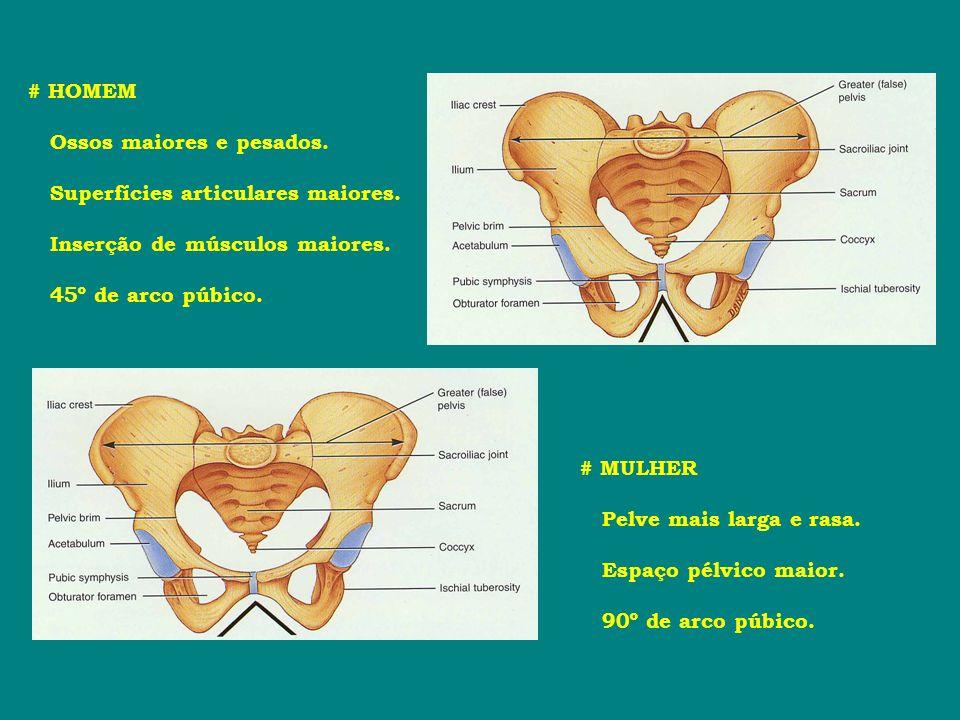 # HOMEM Ossos maiores e pesados. Superfícies articulares maiores. Inserção de músculos maiores. 45º de arco púbico.