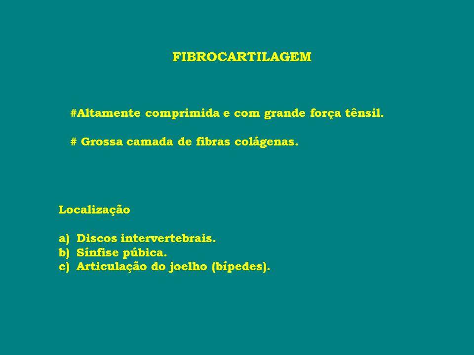 FIBROCARTILAGEM #Altamente comprimida e com grande força tênsil.