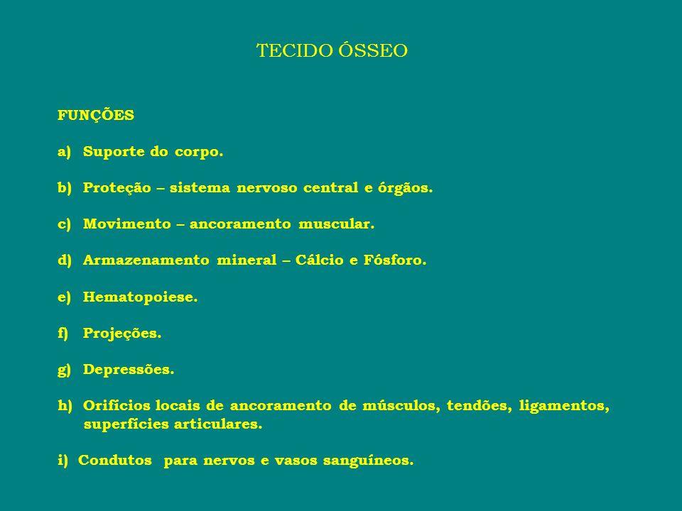 TECIDO ÓSSEO FUNÇÕES Suporte do corpo.