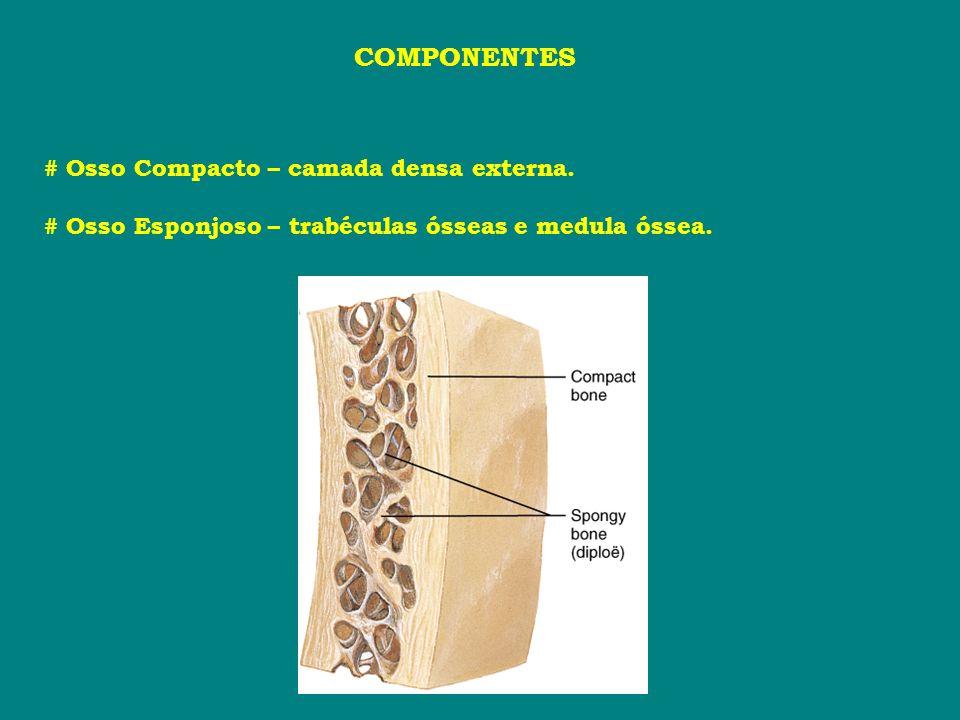 COMPONENTES # Osso Compacto – camada densa externa.