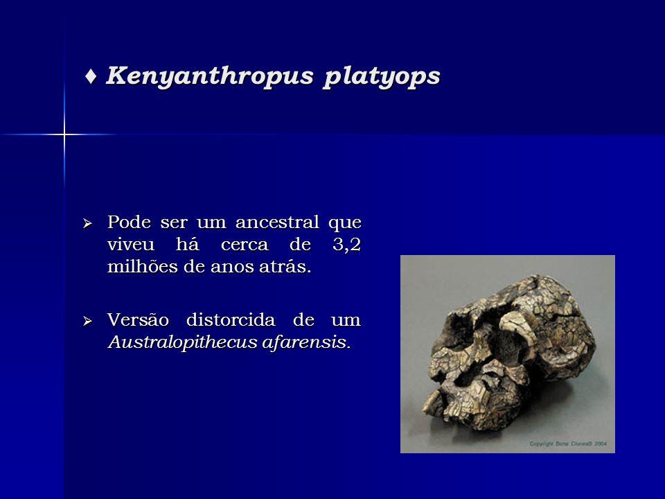 ♦ Kenyanthropus platyops