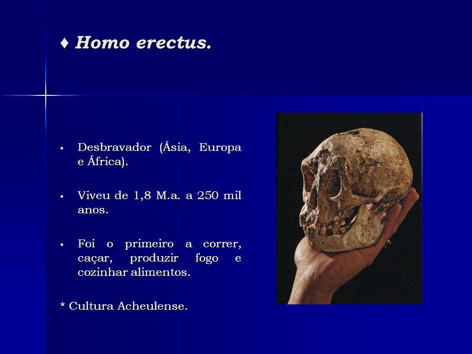 ♦ Homo erectus. Desbravador (Ásia, Europa e África).