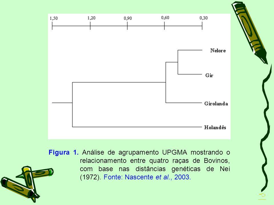 Figura 1. Análise de agrupamento UPGMA mostrando o relacionamento entre quatro raças de Bovinos, com base nas distâncias genéticas de Nei (1972). Fonte: Nascente et al., 2003.