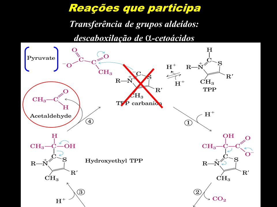 Transferência de grupos aldeídos: descaboxilação de α-cetoácidos