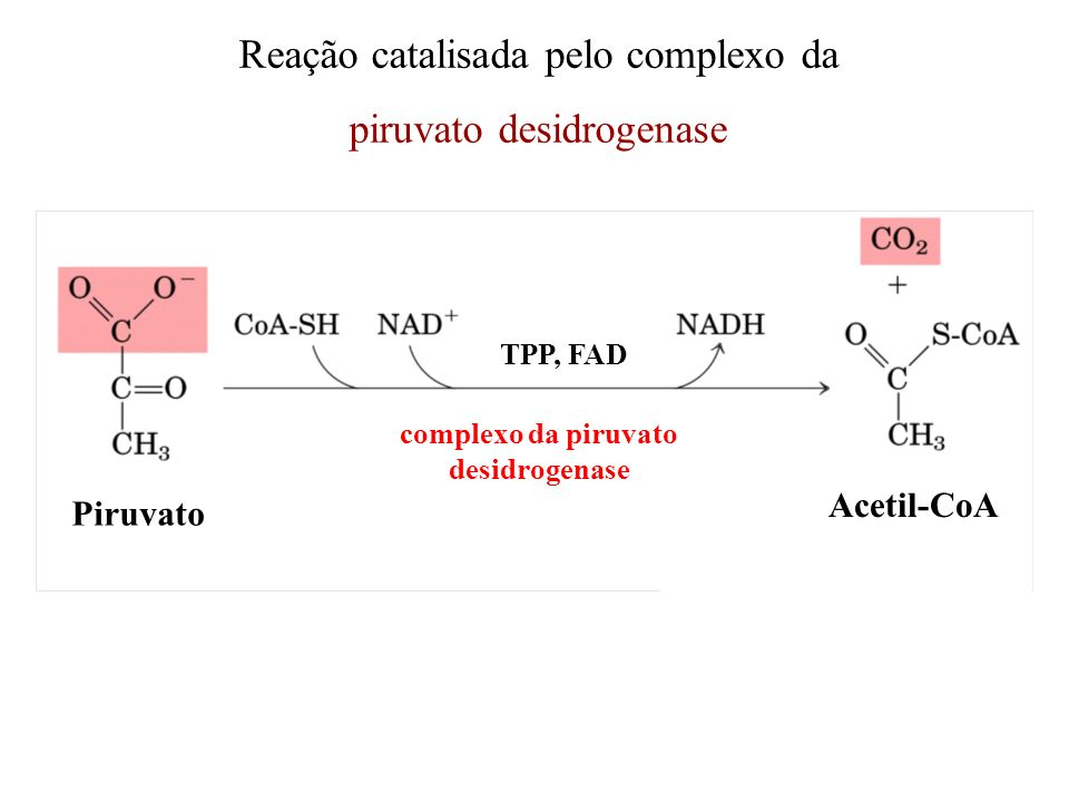 complexo da piruvato desidrogenase