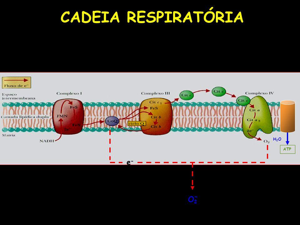 CADEIA RESPIRATÓRIA H2O ATP e- O2 -