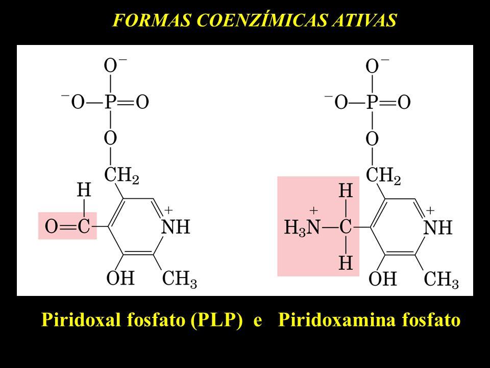 Piridoxal fosfato (PLP) e Piridoxamina fosfato