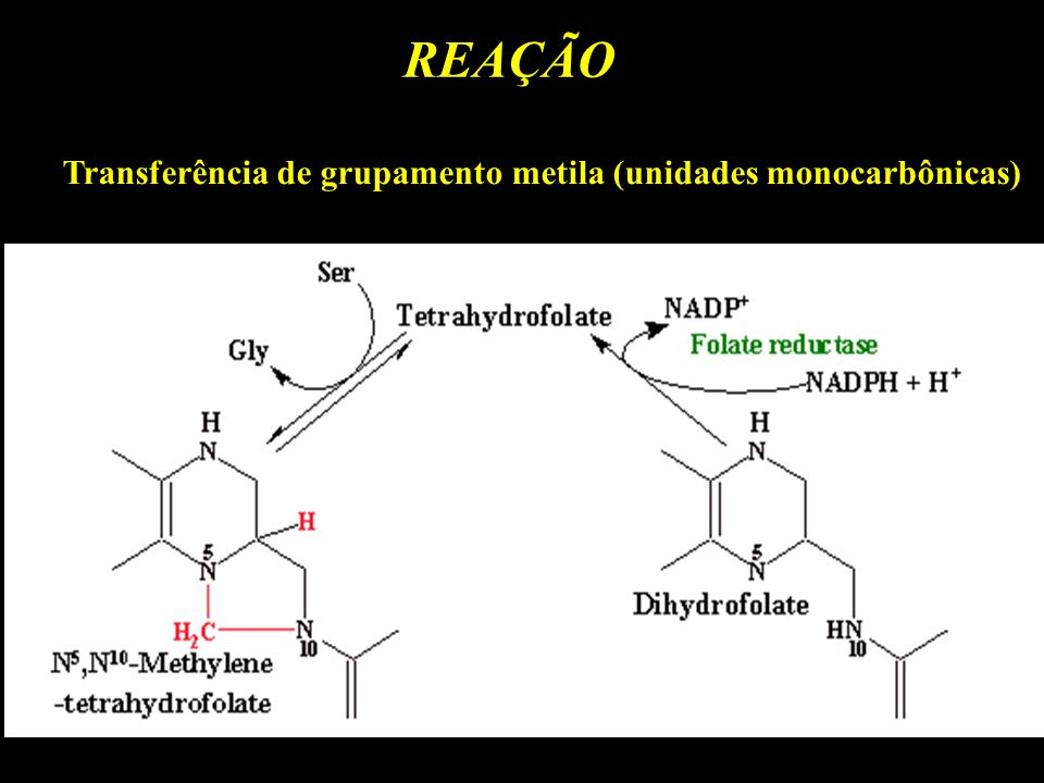 Transferência de grupamento metila (unidades monocarbônicas)