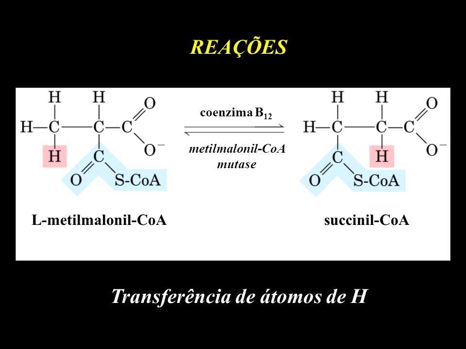 metilmalonil-CoA mutase Transferência de átomos de H