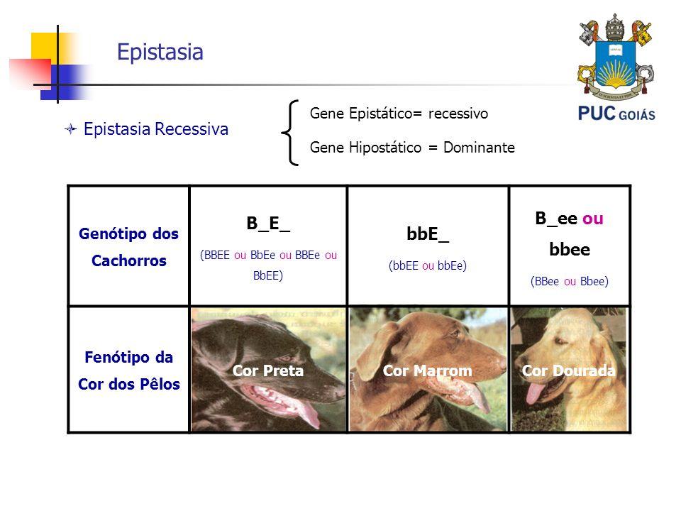 Genótipo dos Cachorros Fenótipo da Cor dos Pêlos