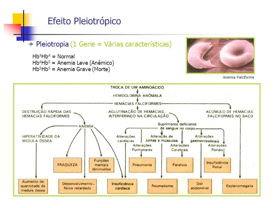 Efeito Pleiotrópico  Pleiotropia (1 Gene = Várias características)