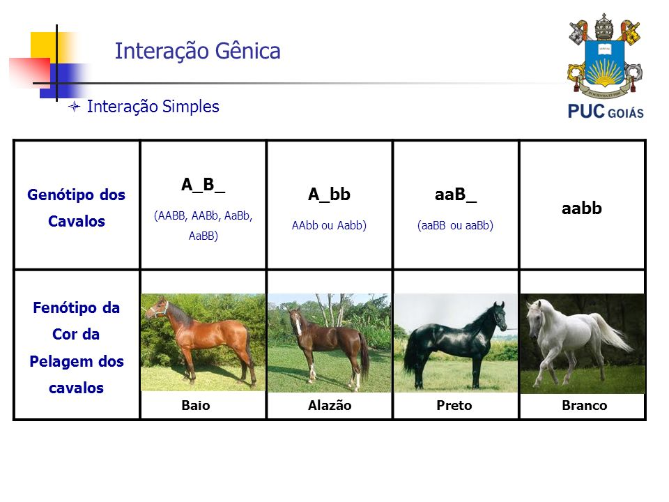 Interação Gênica  Interação Simples A_B_ A_bb aaB_ aabb