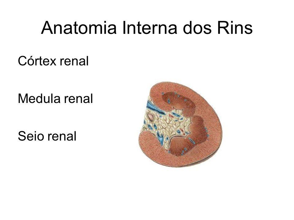 Anatomia Interna dos Rins