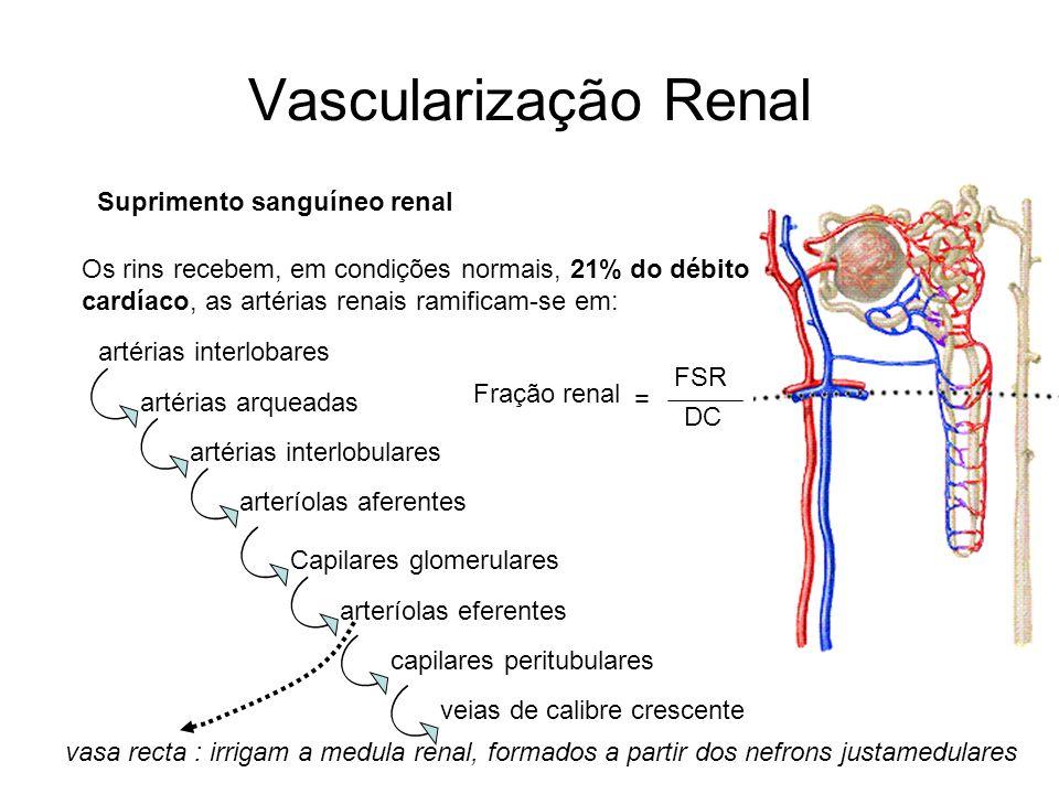 Vascularização Renal Suprimento sanguíneo renal