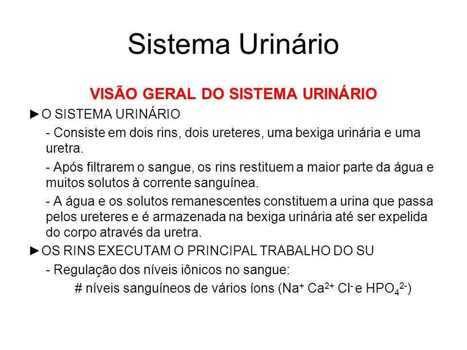VISÃO GERAL DO SISTEMA URINÁRIO