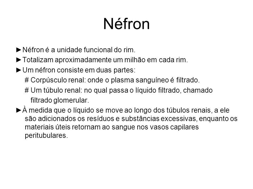 Néfron ►Néfron é a unidade funcional do rim.