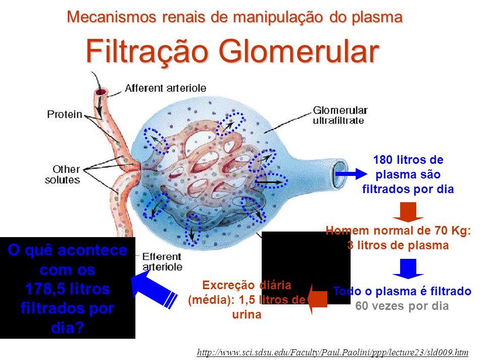 Filtração Glomerular Mecanismos renais de manipulação do plasma
