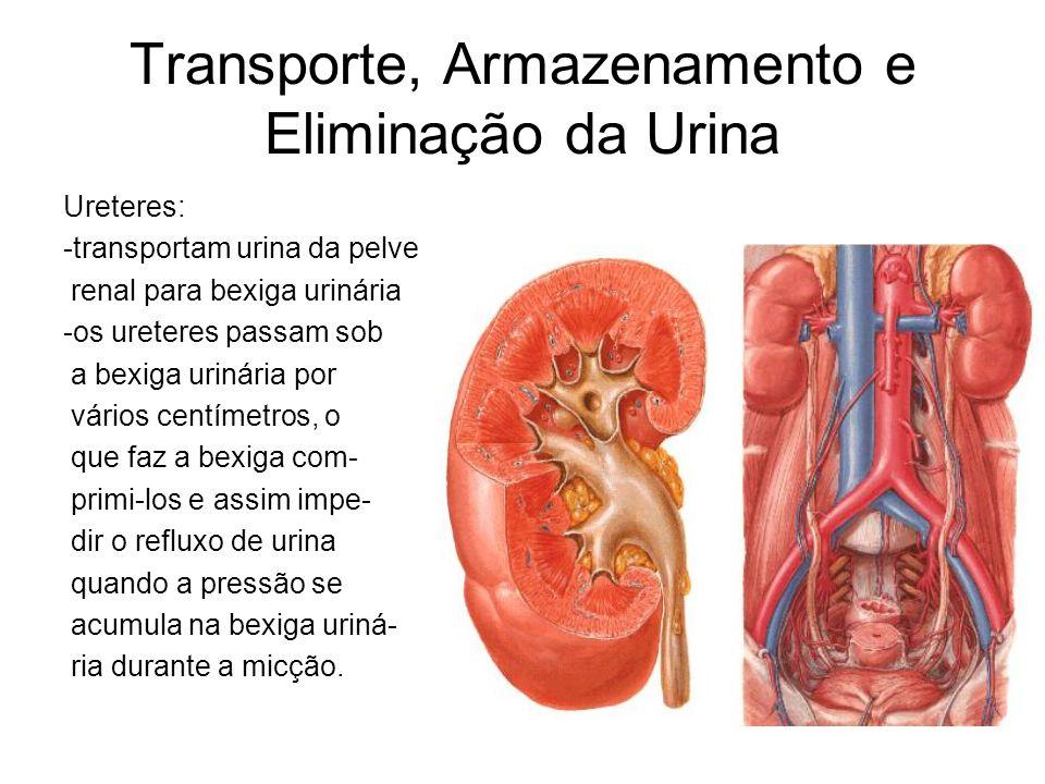 Transporte, Armazenamento e Eliminação da Urina