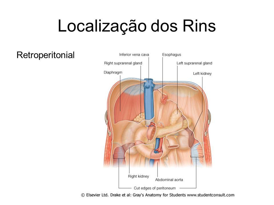 Localização dos Rins Retroperitonial
